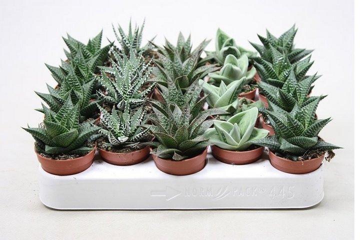 Микс из небольших растений