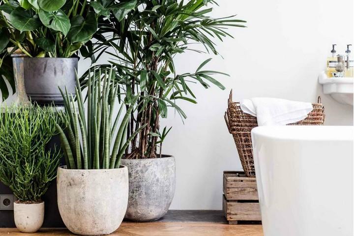 Комнатные растения для украшения интерьера