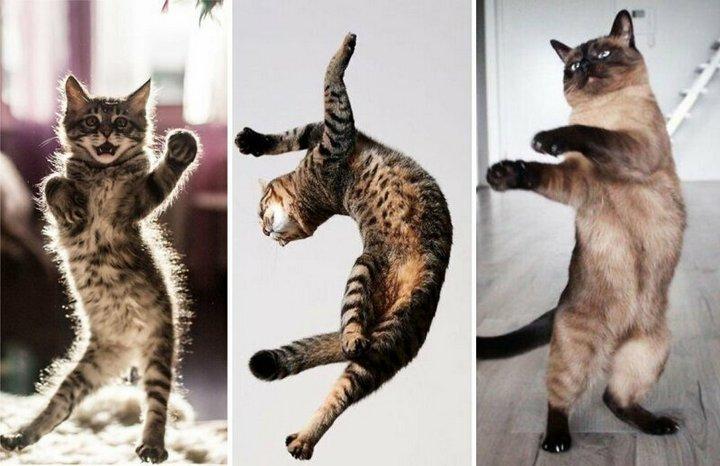 Коты танцуют сальсу