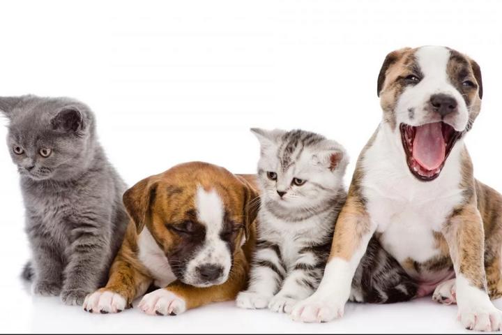 Довольные коты и собаки