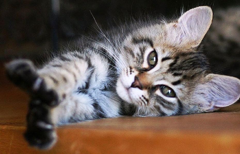 Милый котик, который любит точить когти о любимые обои