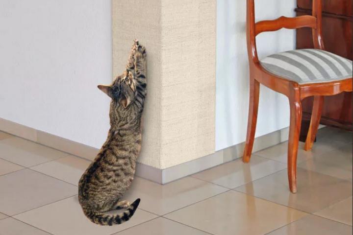 Угол с ковролином для кота