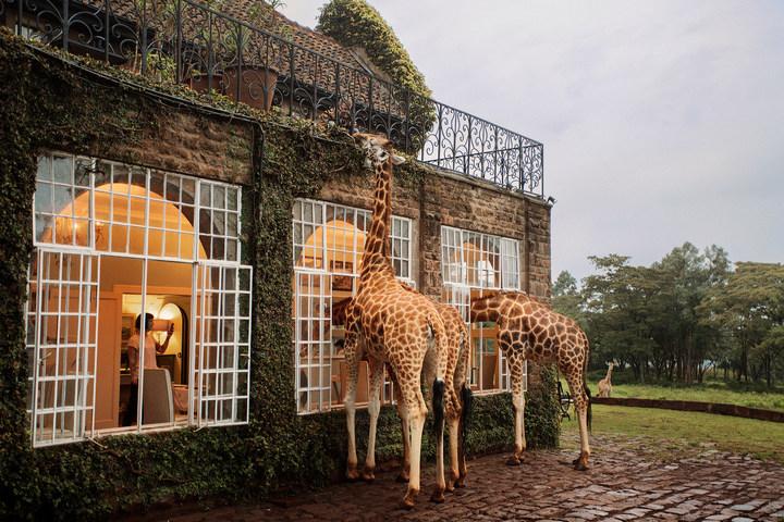 Отель с жирафами