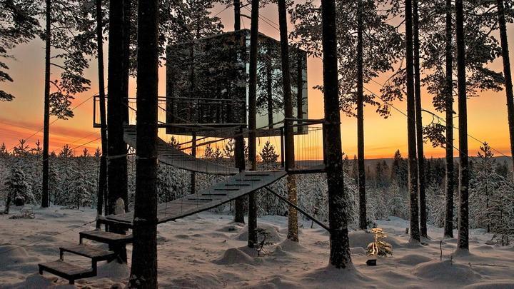 Дом на дереве с зеркальными стенами