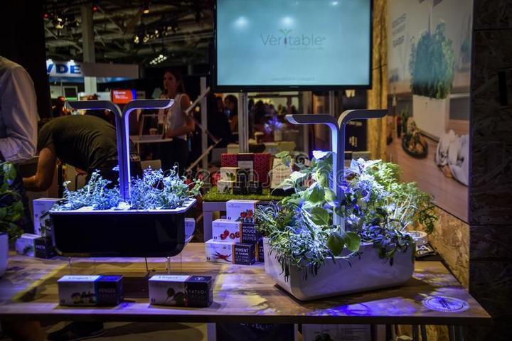 Домашний сад для растений