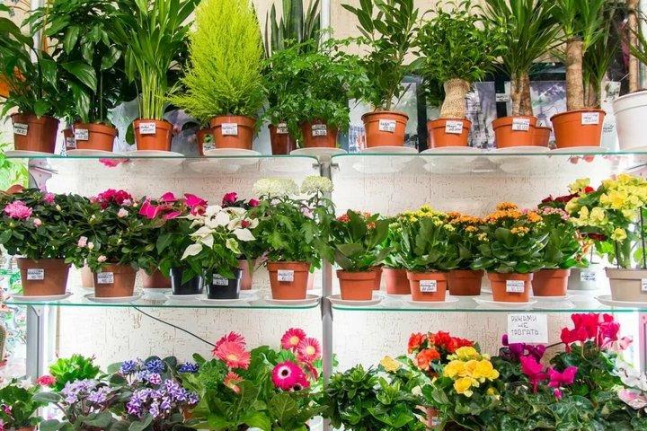 Пластиковые горшки для цветов в магазине
