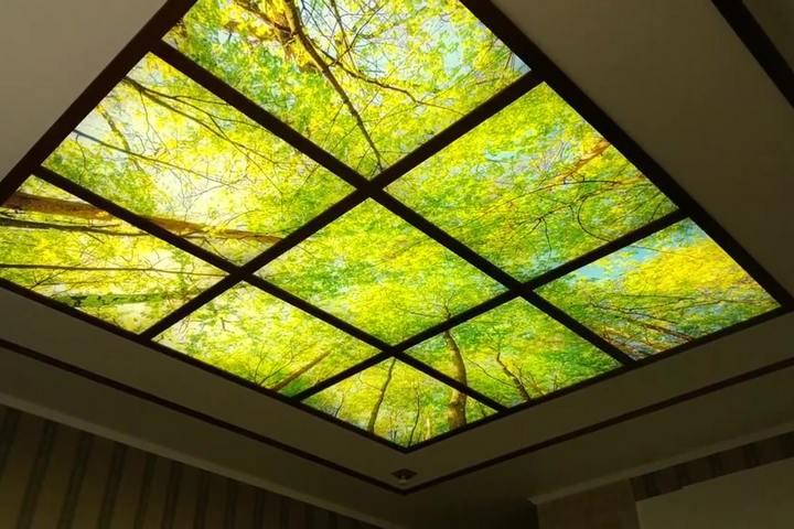 Акриловый потолок с рисунком леса