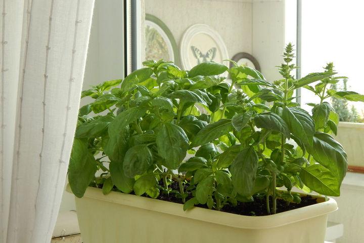Зеленые растения дома