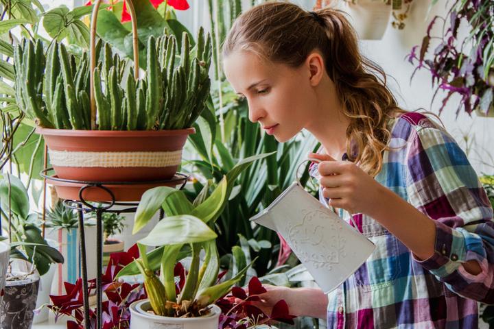 Уборка растений дома