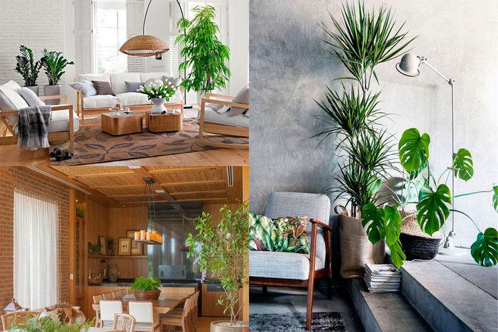 Зеленые растения в квартире