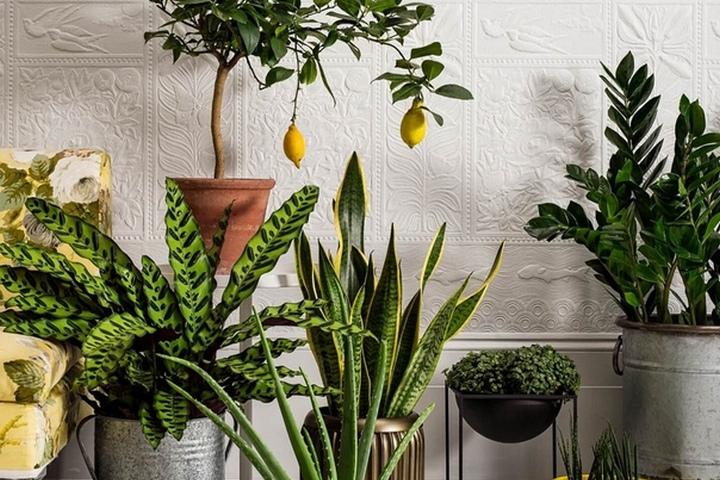 Растения, требующие уборку