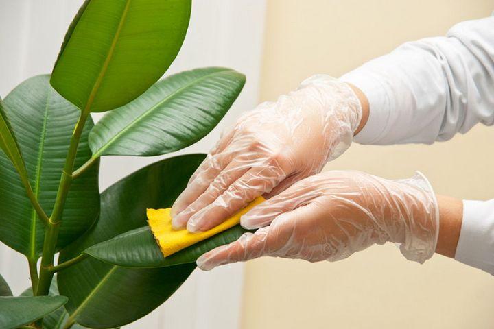 Уборка листьев зеленого растения