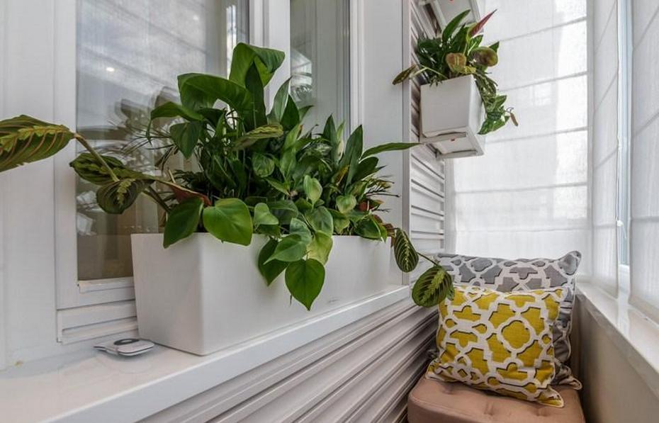 Домашнее растение на зиму