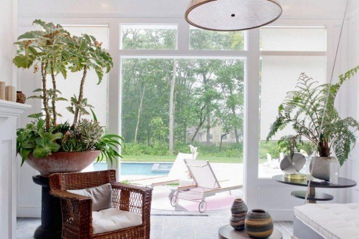 Одиночные растения в гостиной