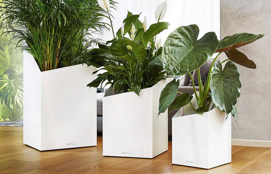 Крупные кашпо для напольных растений