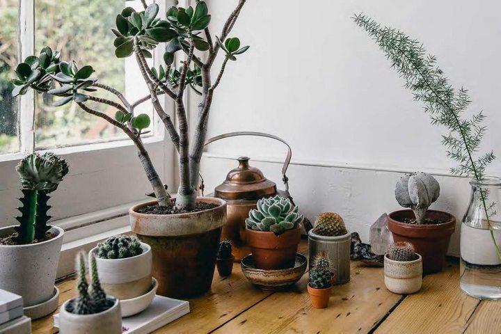 Разноразмерные кашпо и растения в одном стиле